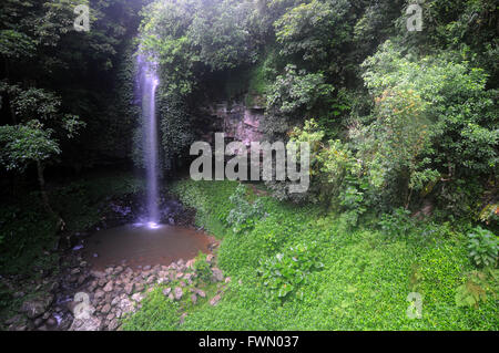 Crystal Falls in the rainforest, Dorrigo National Park, NSW, Australia - Stock Photo