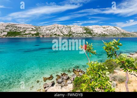 Nature landscape of island Rab in Croatia - Stock Photo