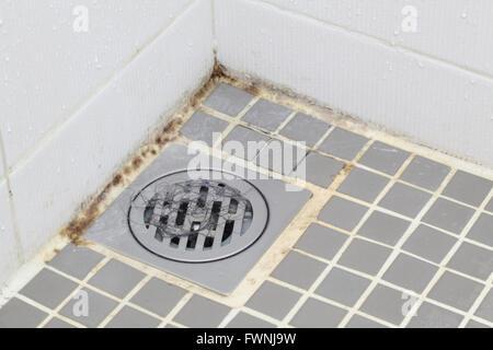 Black mold growing on shower tiles in bathroom - Stock Photo