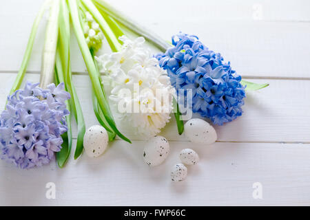 Fresh pink, blue and white flowers hyacinths with Easter eggs in ray of light on white painted wooden background. - Stock Photo