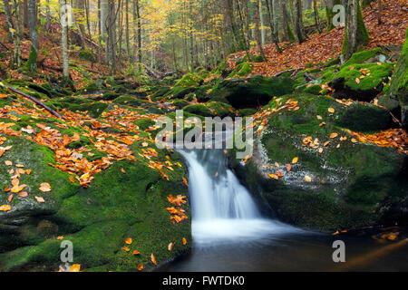 Stream Sagwasser in autumn woodland, Bavarian Forest National Park, Bavaria, Germany - Stock Photo