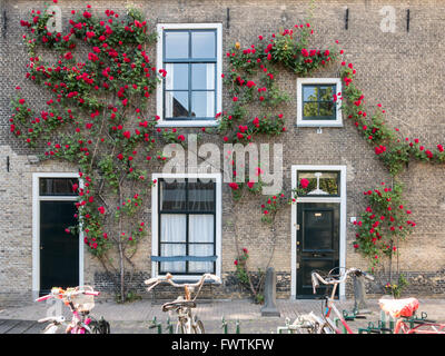 House wall with front doors, windows and climbing rose, parked bicycles, in the old center of Gouda, Netherlands - Stock Photo