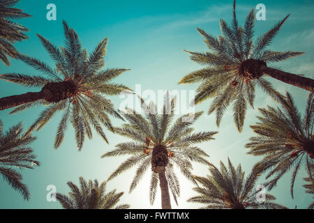 palm trees, beverly hills,los angeles,rodeo drive,summer,vintage,sky,nature,natural,crown-like - Stock Photo