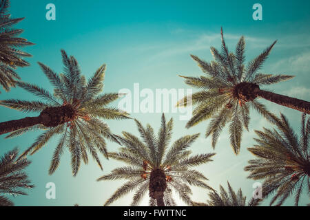 Palm trees, over head half body shot, clear blue sky,crown-liked, Beverly Hills - Stock Photo