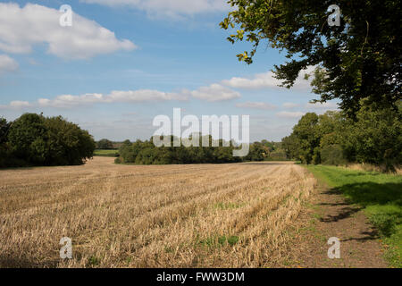 Trees beginning to change colour, cereal stubble and a grass farm track on a fine autumn day, Berkshire, September - Stock Photo