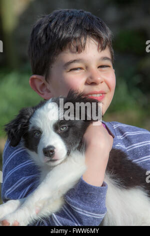 Border Collie Puppy playing - Stock Photo