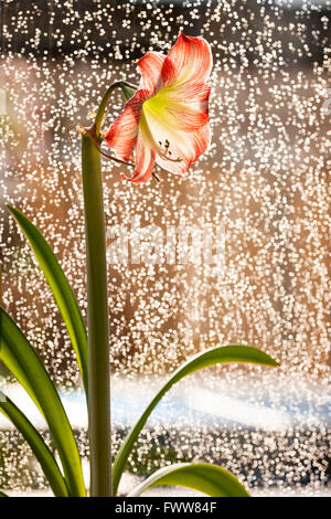 House plants on window sill with raindrops on the window pane. - Stock Photo