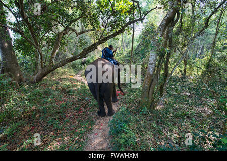 Elephant and mahout in northern Thailand - Stock Photo