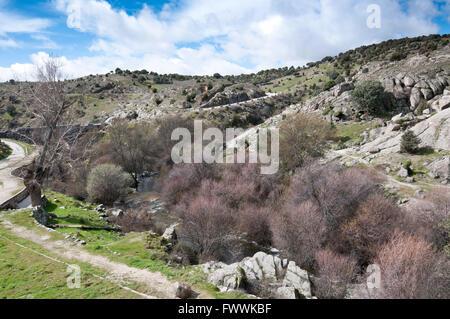 Riparian forest along the river Manzanares, Colmenar Viejo, Madrid, Spain. - Stock Photo