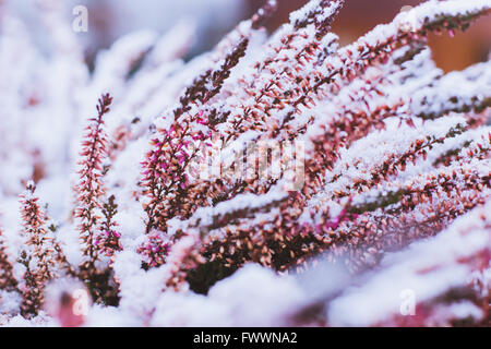 winter background with frozen flowers - Stock Photo