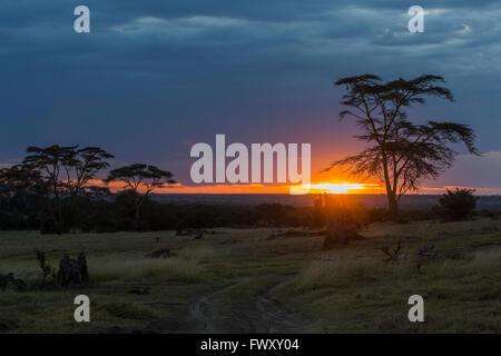 Kenya, Nanyuki, Ol Pejeta Wild Life Conservancy, Rift Valley, Scenic view of sunset - Stock Photo