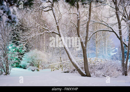 Finland, Pirkanmaa, Tampere, Winter scene with trees and footbridge covered with snow - Stock Photo