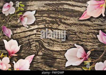 White pink Magnolia blossoms framing a wooden background - Stock Photo