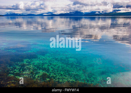 Young fish are swimming in the clear water of Ofotfjorden near Evenes in  northern Norway. - Stock Photo