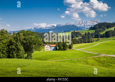 Idyllic landscape in the Alps with green meadows and famous Saentis mountain top in the background, Appenzellerland, - Stock Photo