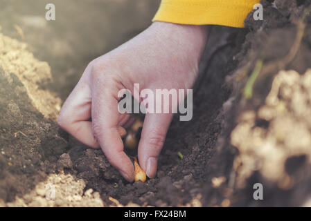 Woman seeding onions in organic vegetable garden, close up of hand planting seeds in arable soil.
