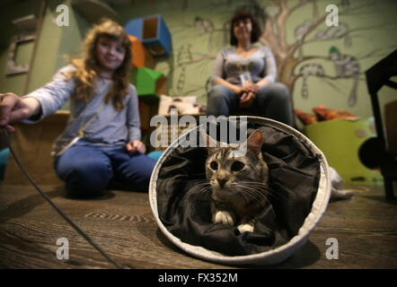Cats Cafe People Moscow