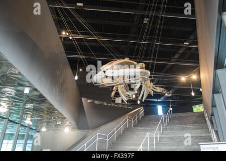 Interior,inside The Blue Museum. Skeleton of a fin whale at entrance of Museum of Natural Science of Catalonia.Barcelona. - Stock Photo