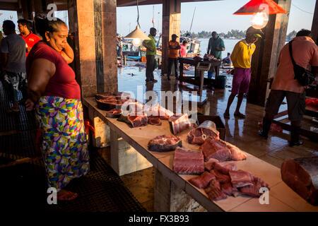 Fishmonger filleting fresh fish, Fishing port, Negombo lagoon, Negombo, Sri Lanka, Indian Ocean, Asia - Stock Photo