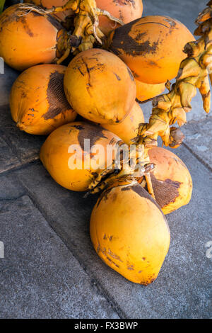 Vendor stand with red coconuts (aka King coconuts) for sale, Colombo, Sri Lanka, Asia - Stock Photo