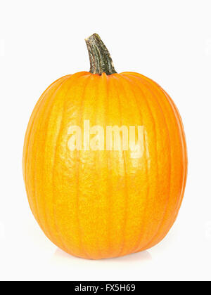 Studio shoot of a pumpkin isolated on white - Stock Photo