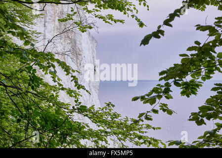 White cliffs at Moen Denmark with green leaves and gray cloudy weather - Stock Photo