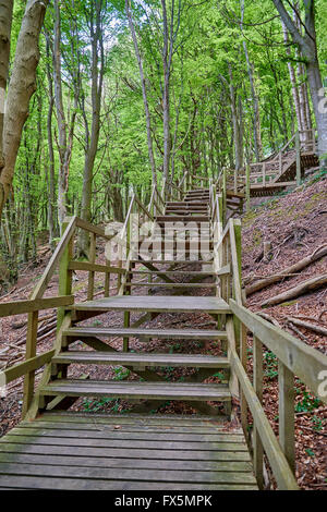 Steep stairs in the forest at the cliffs of Moen, Denmark - Stock Photo