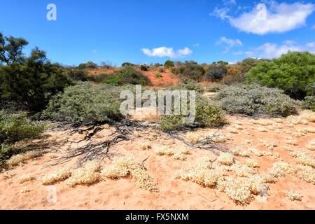 Vegetation of the North West Coast of Western Australia, Australia - Stock Photo