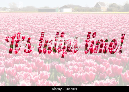 Inspirational quote It s tulips time written on picture of flowers  field in Holland - Stock Photo