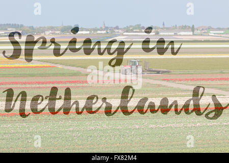 Inspirational phrase Spring in Netherlands written on a picture of Multicolored tulip fields in Holland - Stock Photo