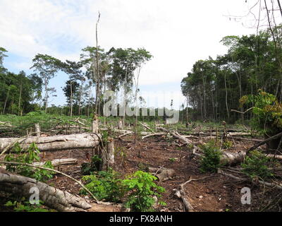 Deforestation in Peru Amazonia - Stock Photo
