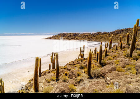 Cactus forest at Incahuasi Island in the Uyuni Salt Desert, Bolivia - Stock Photo
