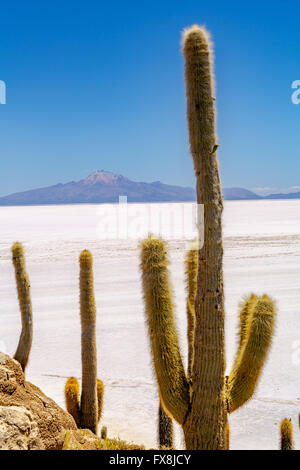 Cactus at Incahuasi Island in the Uyuni Salt Desert, Bolivia - Stock Photo