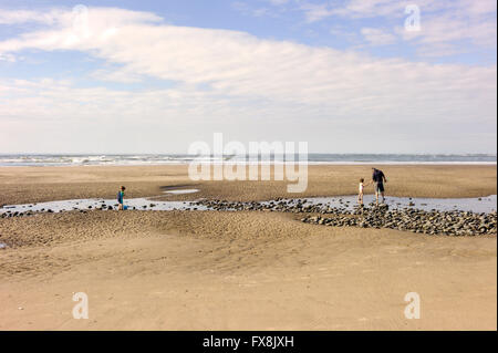 two small children are rock pool fishing with dad on a large expanse of sandy beach with Cardigan bay in the background. - Stock Photo