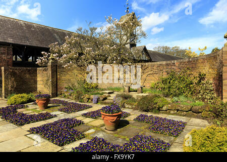 Flagged English garden with violas and a magnolia tree. - Stock Photo
