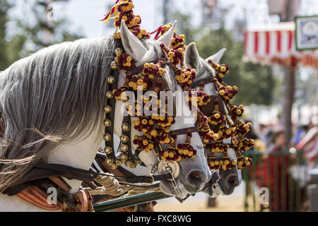 Seville, Spain. 14th Apr, 2016. Detail of horses of a typical chariot at the ''Feria de Abril'' (April's Fair) 2016 - Stock Photo