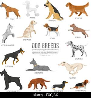 Dogs breed set - Stock Photo
