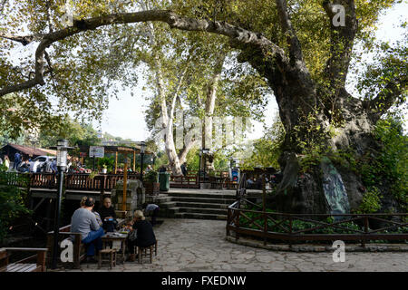 TURKEY Antakya, Musa Dagh, former armenian village Hidirbey, Moses tree, about 4000 armenian villagers from seven - Stock Photo