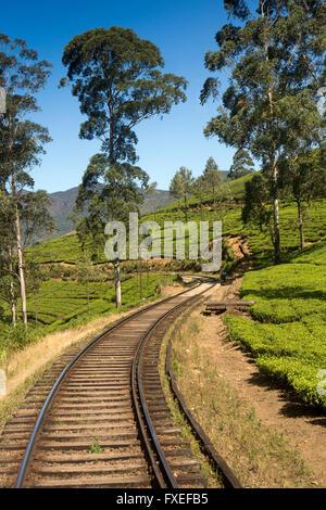 Sri Lanka, train travel, Highland Railway, train passing through tea estate - Stock Photo