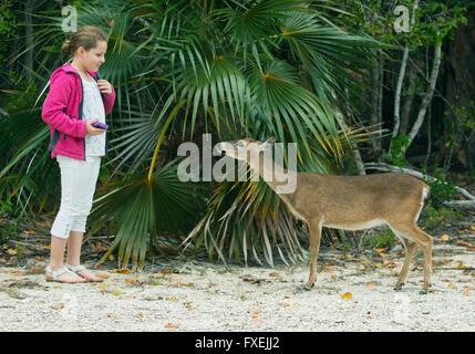 Key Deer and 11-year old Maya Braibish, No Name Key, Florida Keys, Florida - Stock Photo