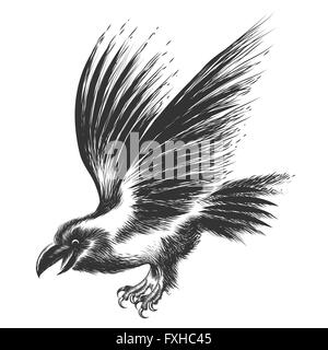 black raven drawn in sketch style isolated on white stock photo