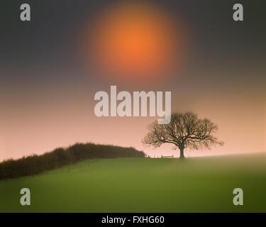 GB - BEDFORDSHIRE: Single Tree with Sun near Woburn - Stock Photo