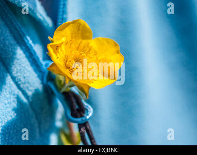 Small yellow flower in the buttonhole of a blue sweater - Stock Photo