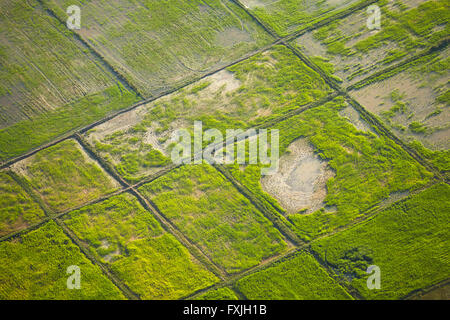 Rice fields near Siem Reap, Cambodia - aerial - Stock Photo