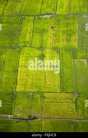 Rice fields near Siem Reap, Cambodia - aerial - Stock Photo