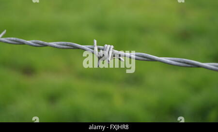 Focus in the foreground of barb on a steel fence - Stock Photo