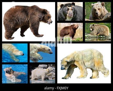 Ten mosaic photos of brown bears and polar bears - Stock Photo