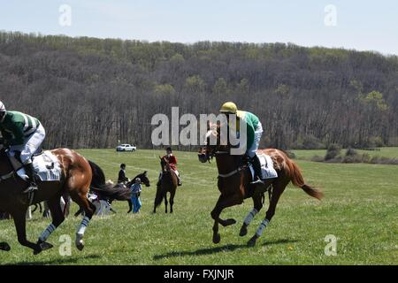 Steeplechase Riders at My Lady's Manor Steeplechase Races in Monkton, MD - Stock Photo