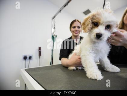 Vet examining a dog - Stock Photo