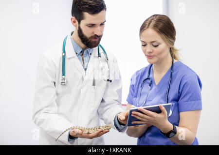 Vet examining a lizard with digital tablet - Stock Photo
